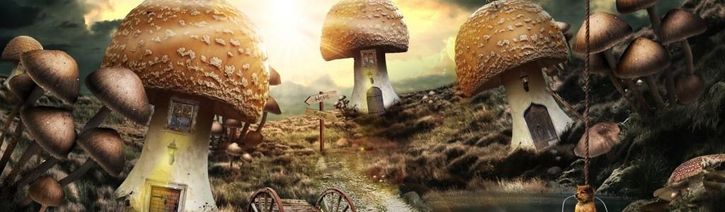 a_mushroom_tale